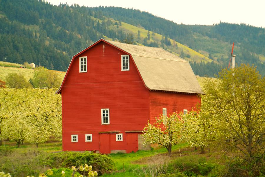 An Old Barn In Odell Oregon Blossoms Photograph
