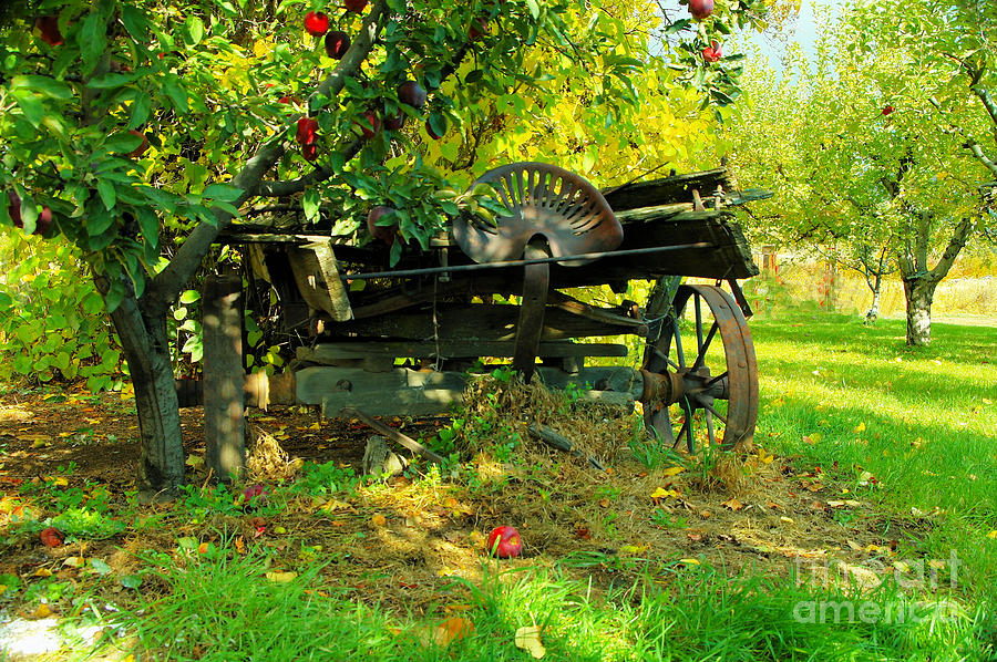 Fruit Photograph - An Old Harvest Wagon by Jeff Swan