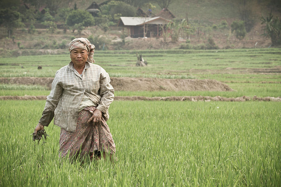 An Old Woman Working In A Rice Field Photograph by Nicholas J Reid