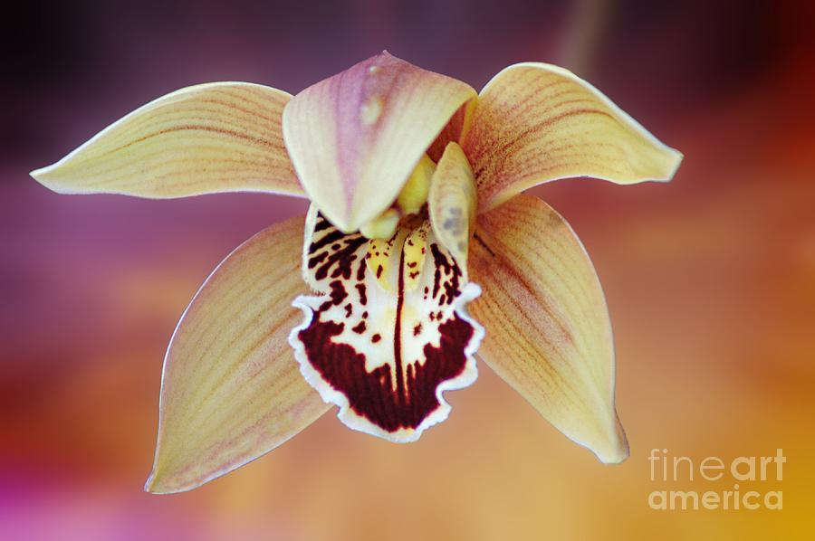 Flower Photograph - An Orchid by Ben Yassa