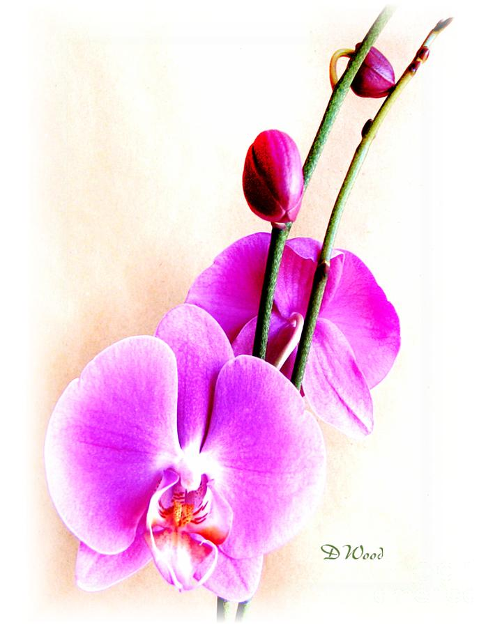 Orchid Digital Art - An Orchid For You by Doris Wood