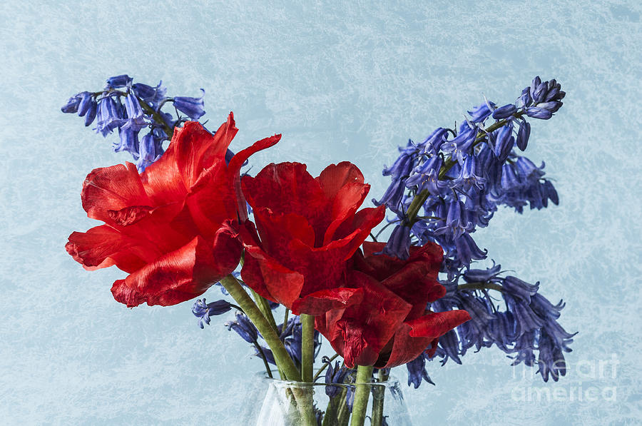 Red Tulips Photograph - An Unusual Pair by Steve Purnell
