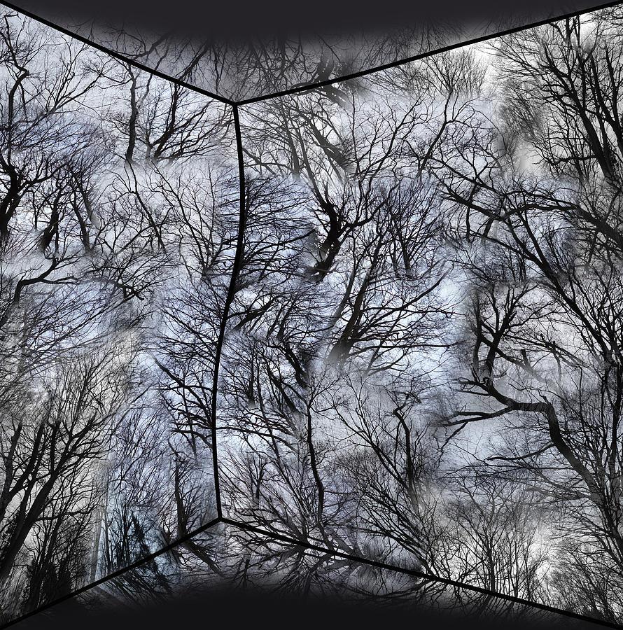 Analog Photograph - Analog Wood by Florin Birjoveanu