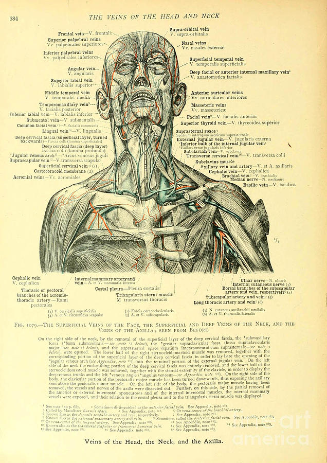 Anatomy Human Body Old Anatomical 21 Painting By Boon Mee