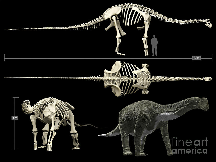 Zoology Digital Art - Anatomy Of A Titanosaur by Rodolfo Nogueira