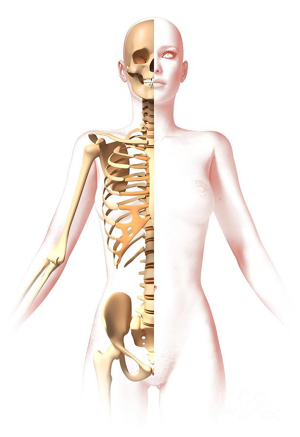 Anatomy Of Female Body With Skeleton Digital Art By Leonello Calvetti