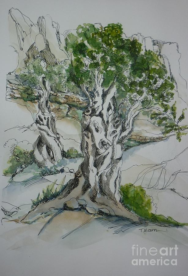 Olive Painting - Ancient Olive Grove by Therese Alcorn