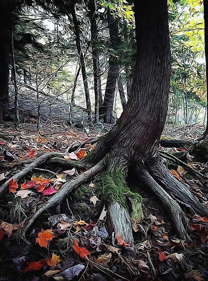 Tree Photograph - Ancient Root by Natasha Marco