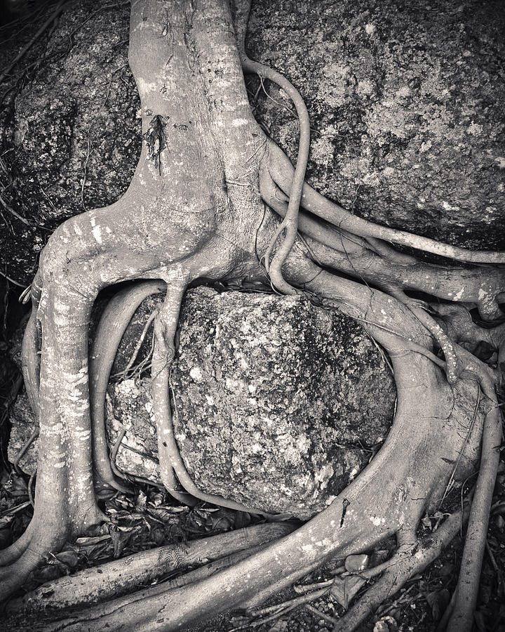 3scape Photos Photograph - Ancient Roots by Adam Romanowicz