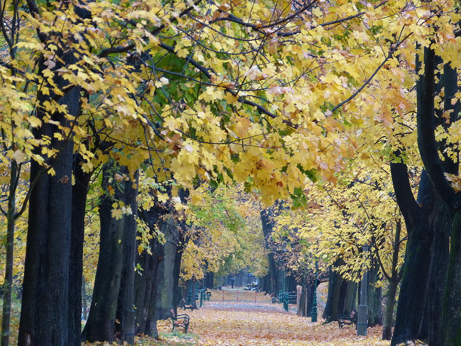 Autumn Photograph - And Autumn Came by Janina  Suuronen