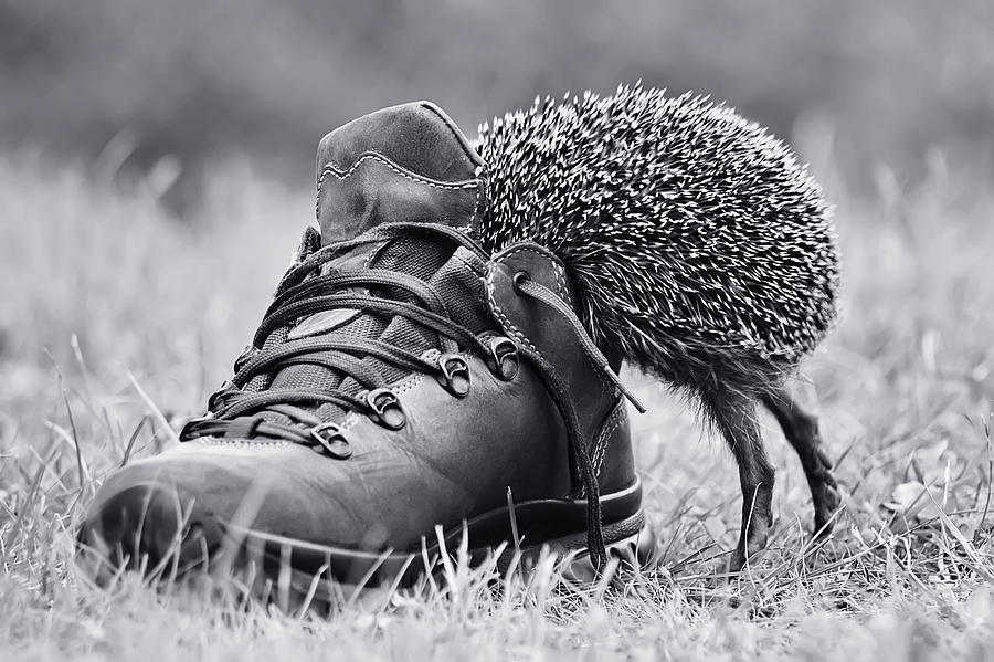 Hedgehog Photograph - And Suddenly Its My Size? by Elena Solovieva