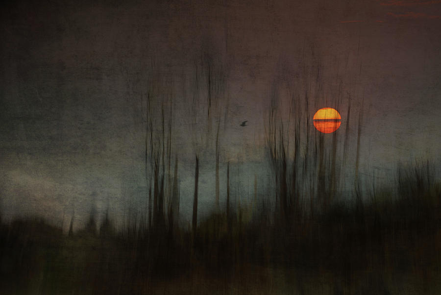 Mood Photograph - ...and The Moon Stood Still For The Night Birds Song... by Charlaine Gerber