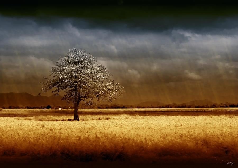 Landscapes Photograph - And The Rains Came by Holly Kempe
