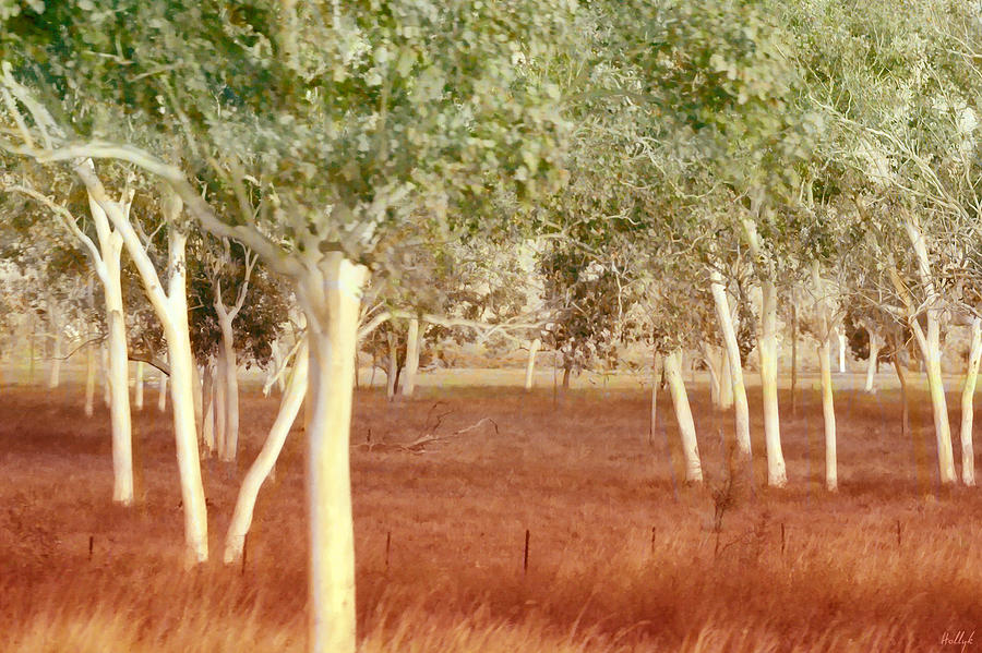 Landscape Photograph - And The Trees Danced by Holly Kempe