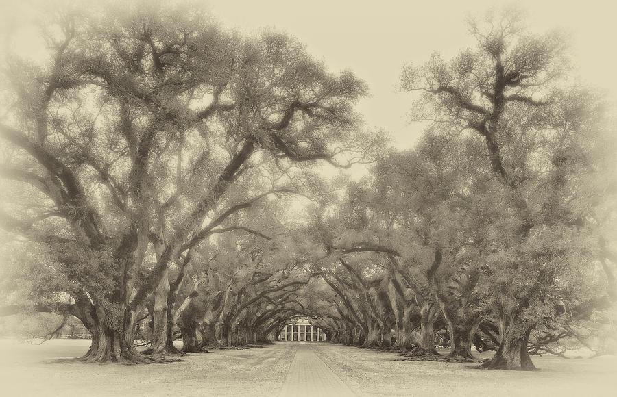 Oak Alley Plantation Photograph - And Time Stood Still Sepia by Steve Harrington