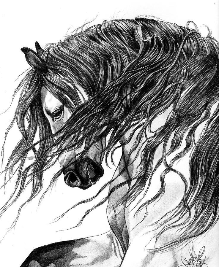 Horse Art Drawing - Andalusian Arabian Head by Cheryl Poland