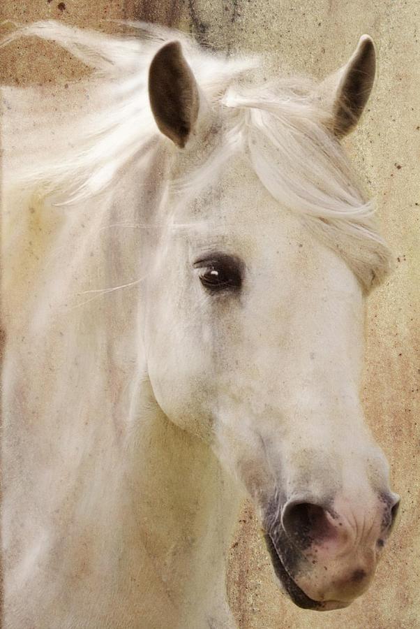 White Stallion Photograph - Andalusian Dreamer by Melinda Hughes-Berland
