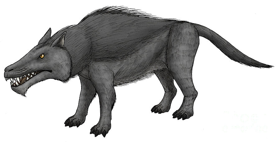 N Ungulate Andrewsarchus, ...