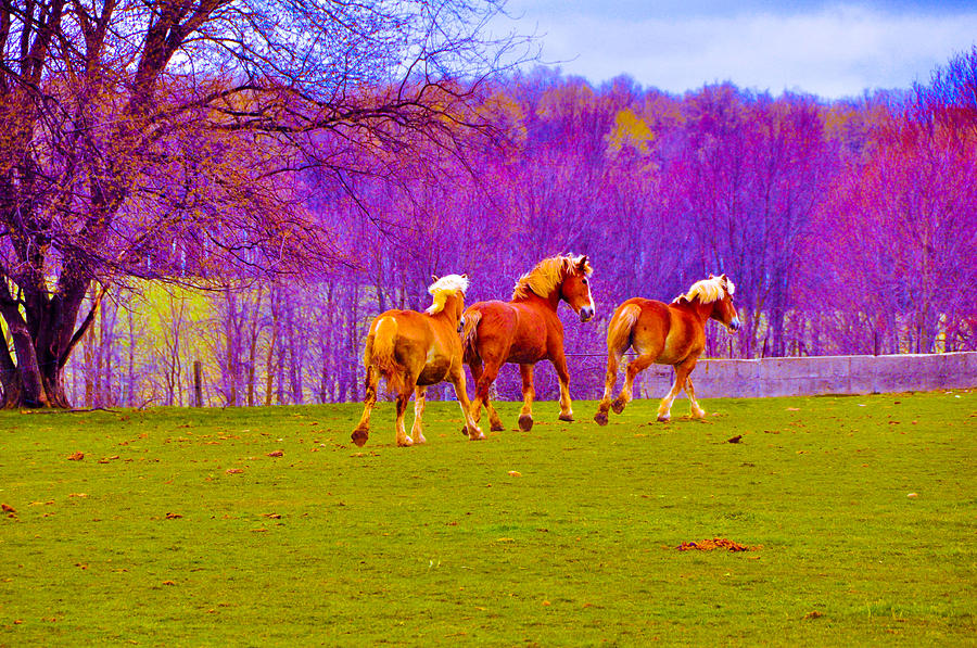 Horses Photograph - Andys Horses by BandC  Photography