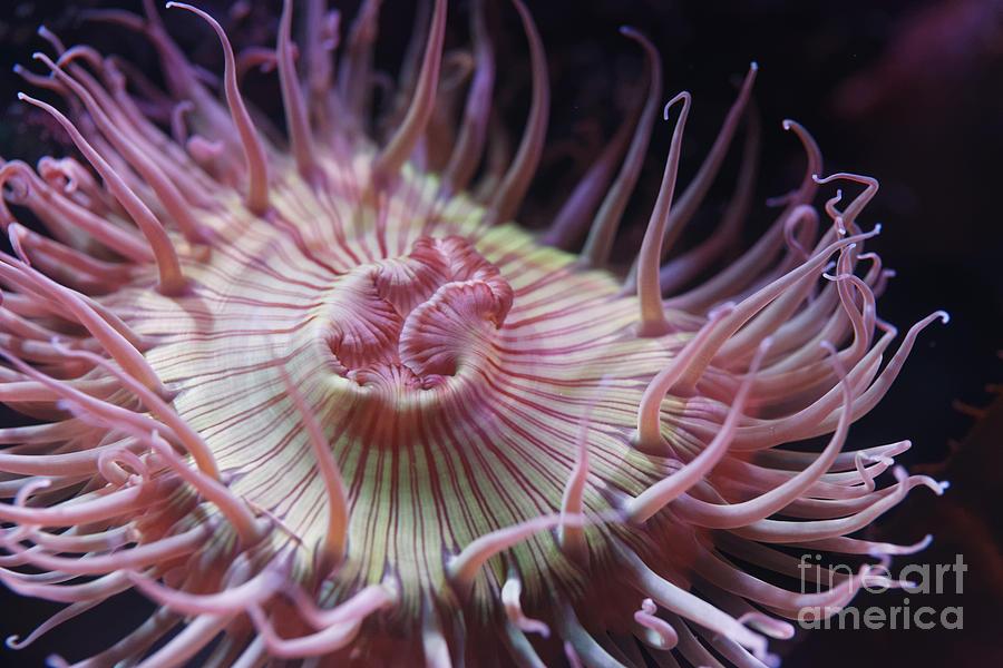 Anemone by James L Davidson