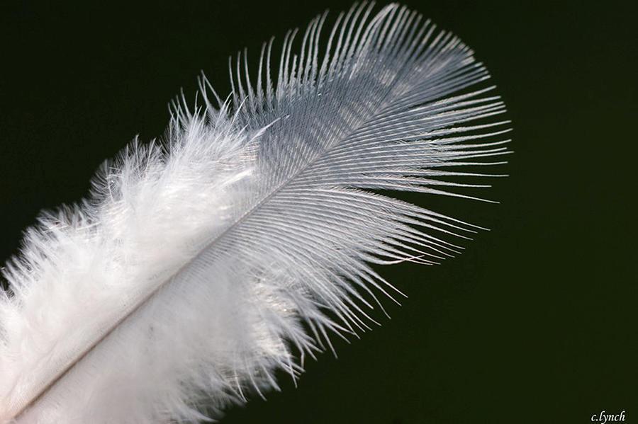 Angel Photograph - Angel Feather by Carol Lynch