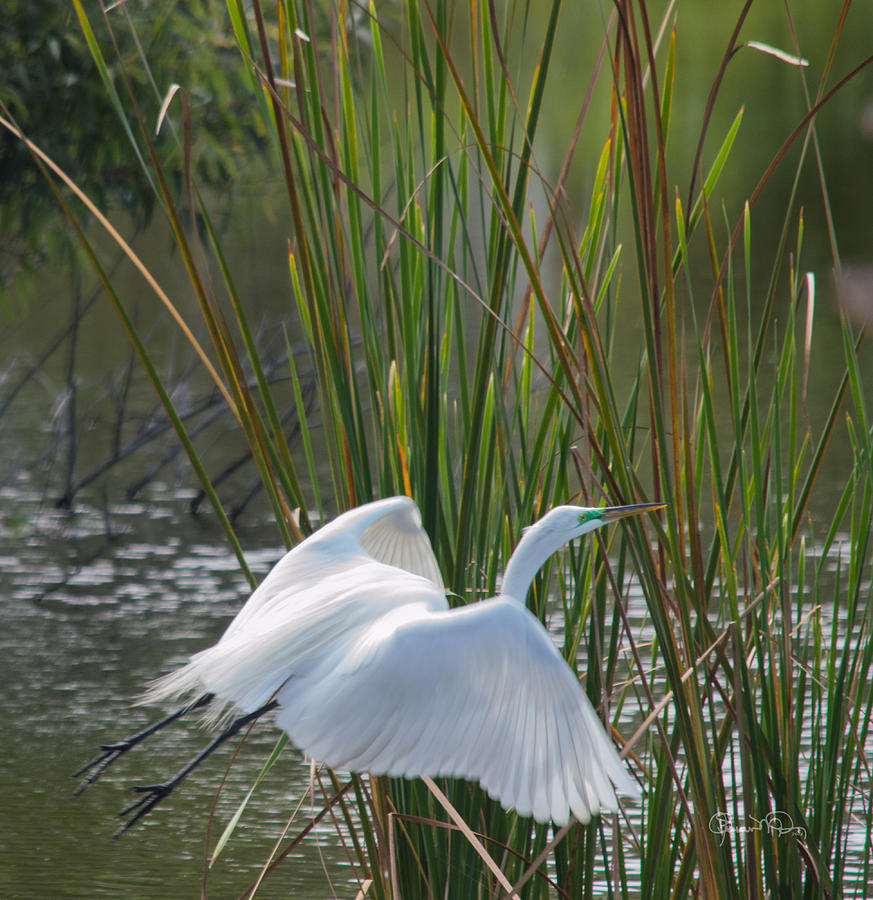 Angel In The Marsh by Susan Molnar