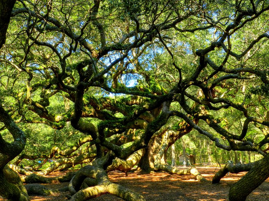 Beautiful Photograph - Angel Oak 006 by Lance Vaughn