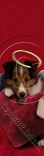Bookmark Photograph - Angel Puppy With Heart # 465 by Jeanette K