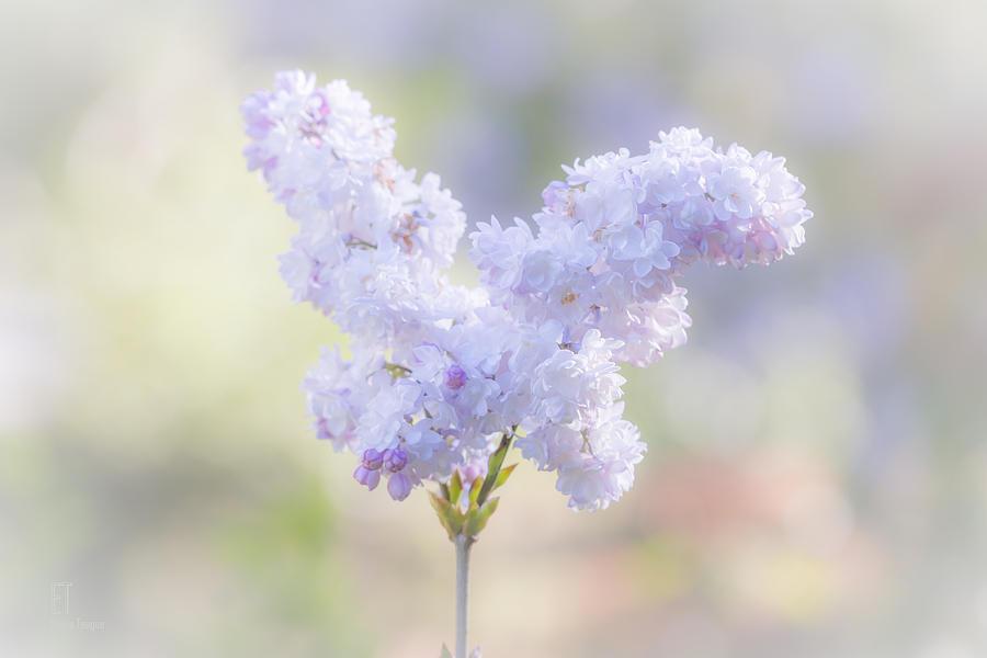 Flower Photograph - Angela by Elaine Teague