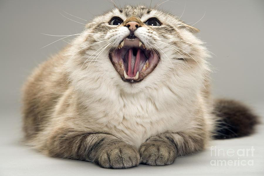 самые картинка кота бесите пресинаптическое