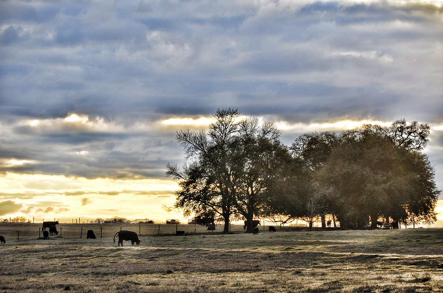 Landscapes Photograph - Angus Evening by Jan Amiss Photography