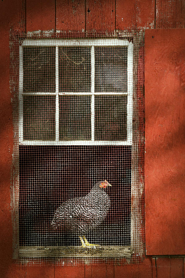 Chick Photograph - Animal - Bird - Chicken In A Window by Mike Savad