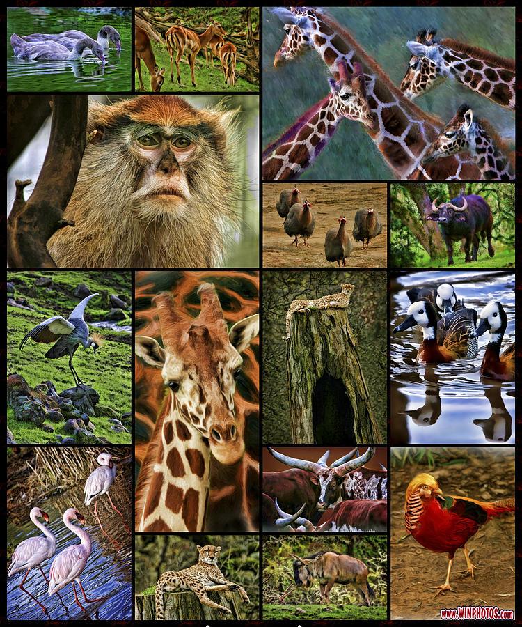Animal Collage Photograph By Blake Richards