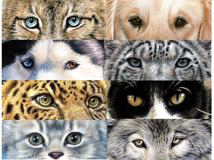 Painting Animal Eyes Acrylic