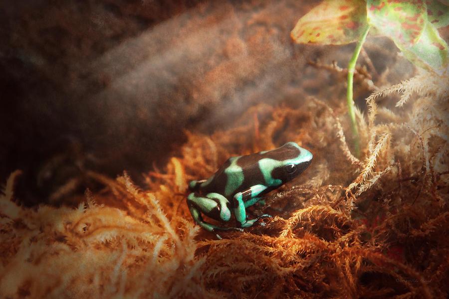 Savad Photograph - Animal - Frog - Lick The Green Frog by Mike Savad