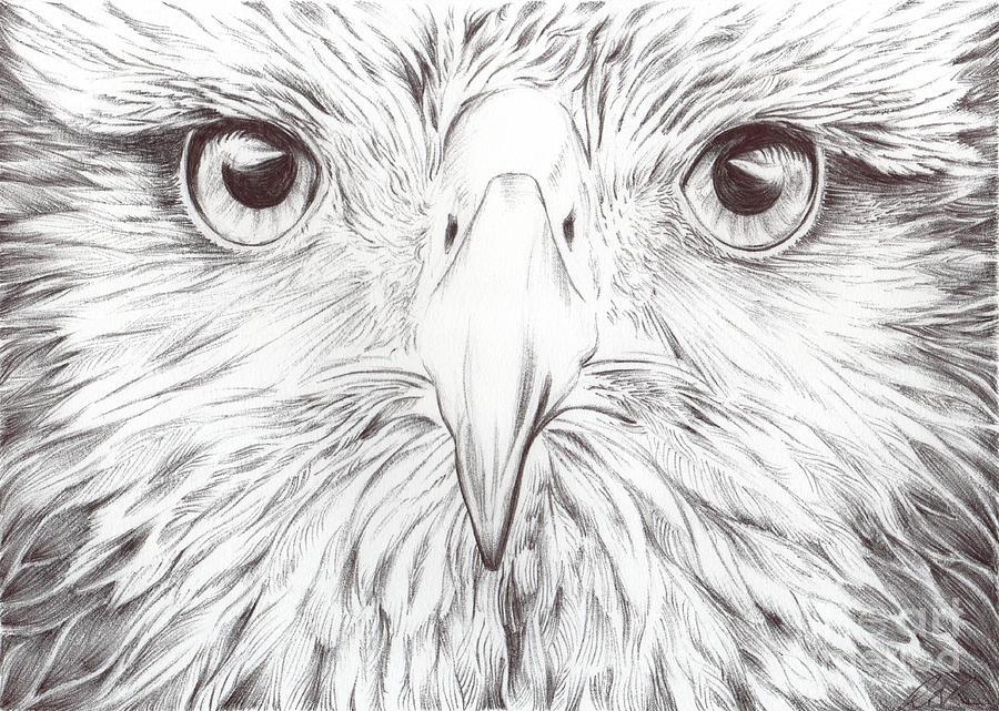 Animal Kingdom Series  Bird Of Prey Drawing by Bobbie S Richardson
