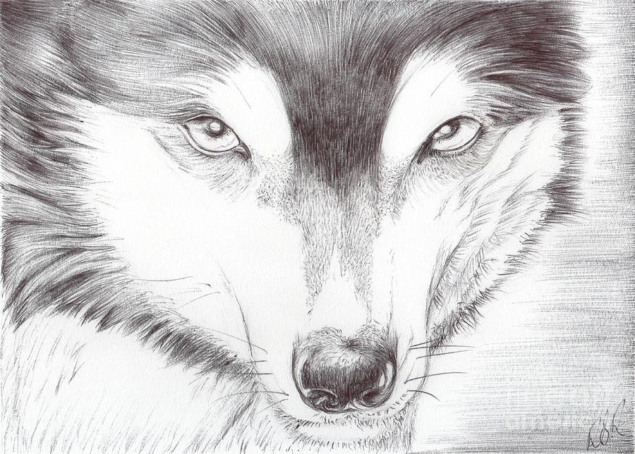 Animal Drawing - Animal Kingdom Series - Wild Friend by Bobbie S Richardson