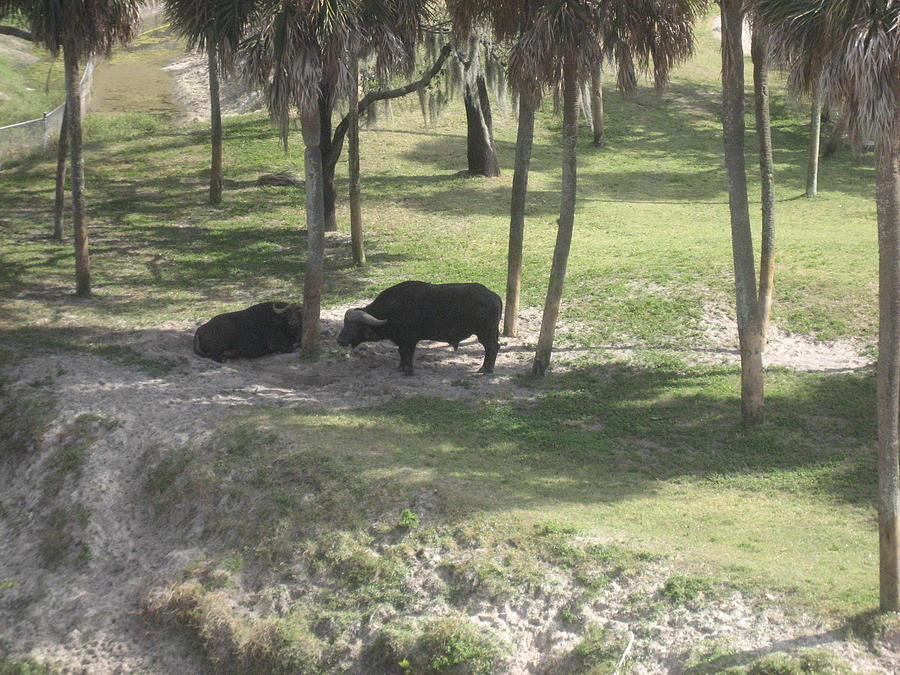 Amusement Photograph - Animal Park - Busch Gardens Tampa - 01136 by DC Photographer