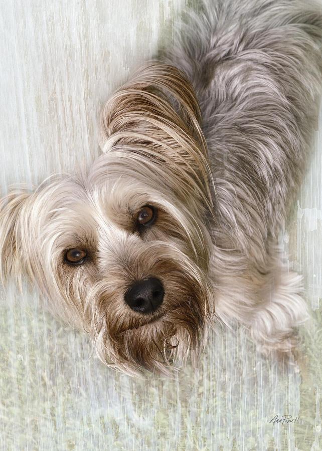 Dog Digital Art - animals - dogs - Rascal by Ann Powell