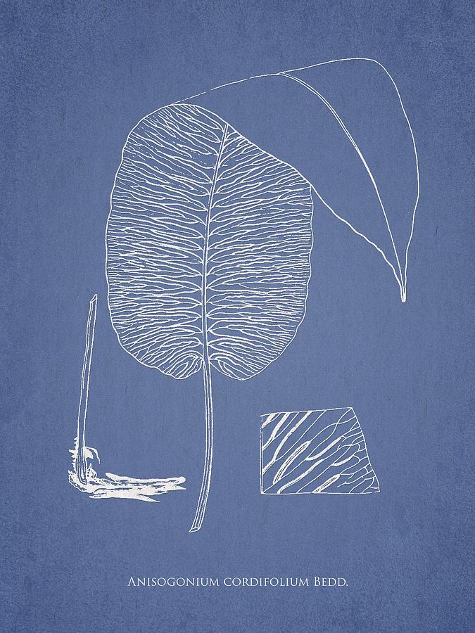 Fern Drawing - Anisogonium Cordifolium by Aged Pixel