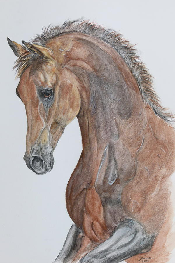 Acrylic Prints Painting - Another  Arabian Horse by Janina  Suuronen