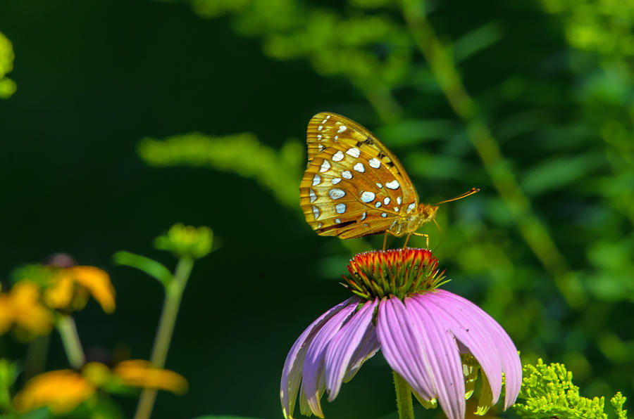Another Pollinator Photograph