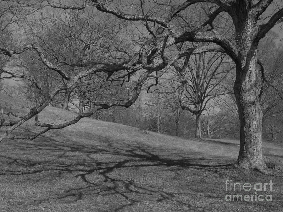 Black And White Tree Photograph - Ansels Tree by Anita Adams