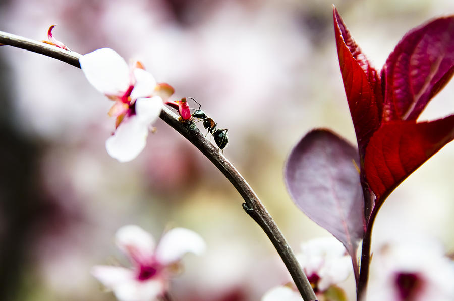 Ant Photograph - Ant On A Plant1 by Josh Clifford