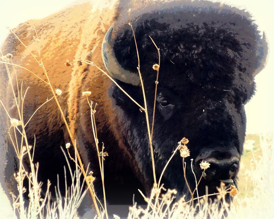 Buffalo Photograph - Antelope Island Buffalo by Heidi Manly