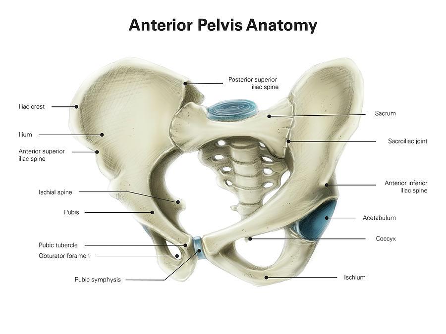 Beste Spine And Pelvis Anatomy Zeitgenössisch - Anatomie Ideen ...