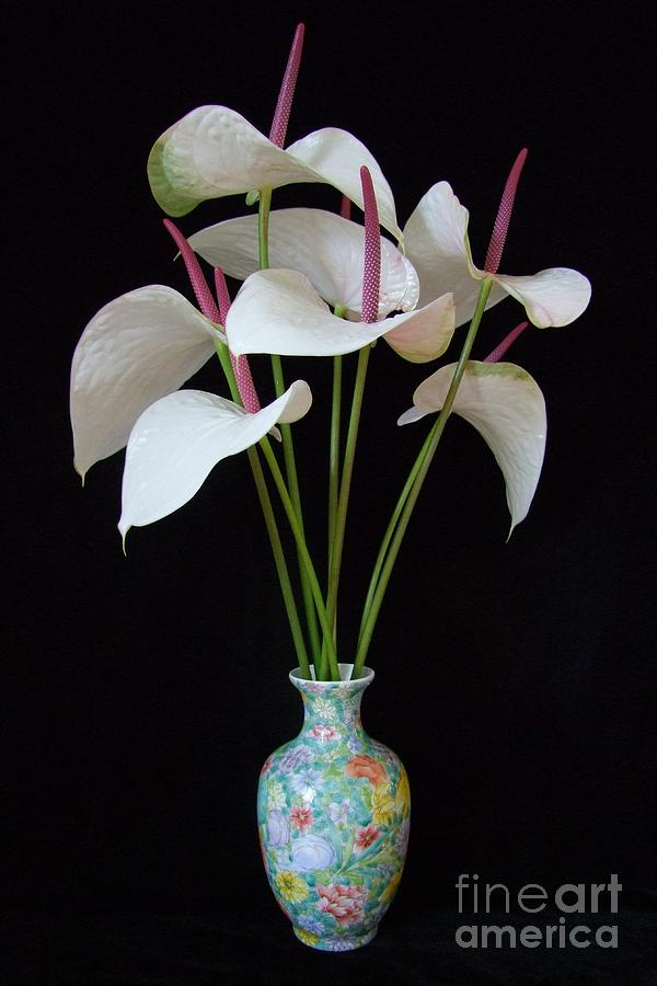 Flowers Photograph - Anthurium Bouquet by Mary Deal