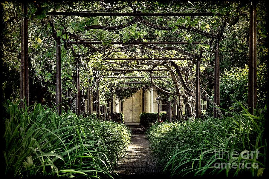 Pergola Photograph - Antique Pergola Arbor by Olivier Le Queinec