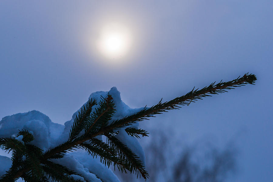 Blue Photograph - Antisipation Of New Year by Alexander Senin