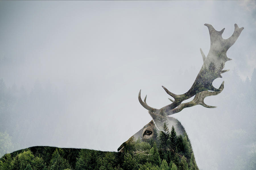 Double Exposure Photograph - Antler Double-exposed by Angyalosi Be??ta
